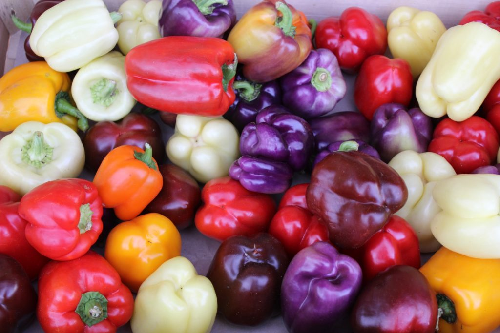 how to grow bell peppers from seeds