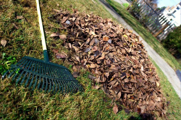 How to make leaf mold