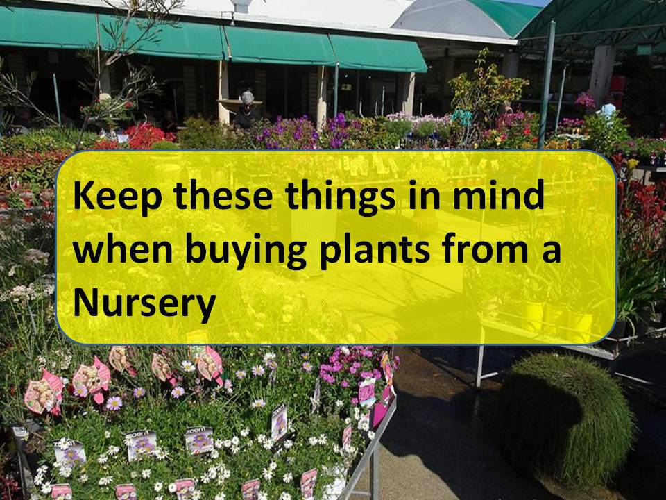 Buying Plants From A Nursery